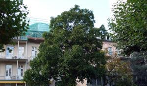 Sanatorium-Rosenthal